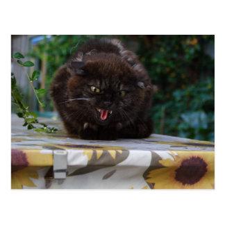 Cartão Postal Gato irritado