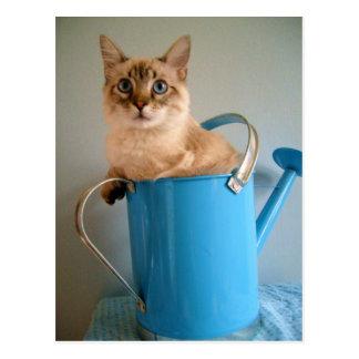 Cartão Postal Gato lindo na lata da água