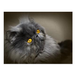 Cartão Postal Gato macio preto com olhos alaranjados