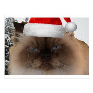 Cartão Postal Gato mal-humorado do Natal