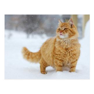 Cartão Postal Gato malhado alaranjado na neve