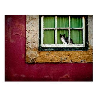 Cartão Postal Gato na janela