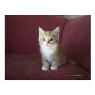 Cartão Postal Gato no sofá