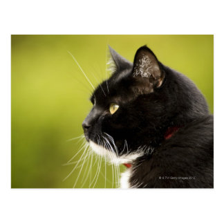 Cartão Postal Gato preto