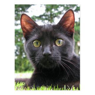 Cartão Postal Gato preto afortunado