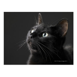 Cartão Postal Gato preto contra o fundo preto, fim-acima