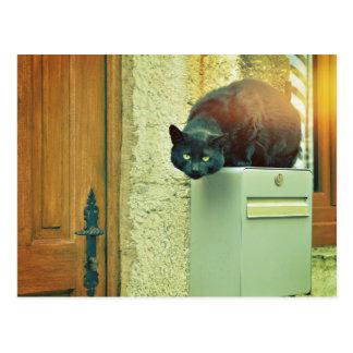 Cartão Postal gato preto da rua