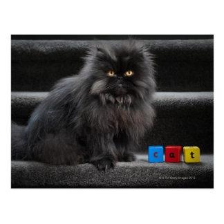 Cartão Postal Gato preto que senta-se em escadas por blocos de