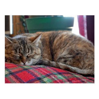 Cartão Postal Gato que dorme na cobertura