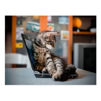 Cartão Postal Gato que encontra-se no caderno