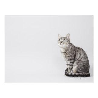 Cartão Postal Gato que olha acima
