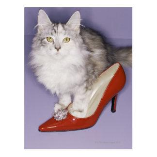 Cartão Postal Gato que pisa no salto alto