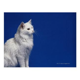 Cartão Postal Gato que senta-se contra o fundo azul