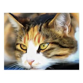 Cartão Postal Gato satisfeito