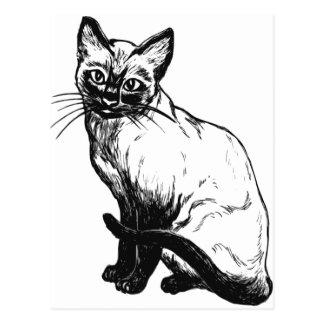 Cartão Postal Gato Siamese bonito