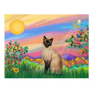 Cartão Postal Gato Siamese - estrela do dia