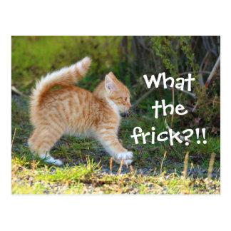 Cartão Postal Gato surpreendido engraçado. Que o frick?