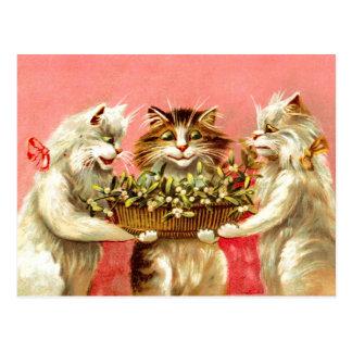Cartão Postal Gatos com visco