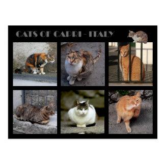 Cartão Postal Gatos de Capri - Italia