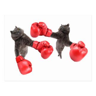 Cartão Postal Gatos engraçados do encaixotamento