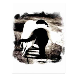 Cartão Postal Gatos preto e branco