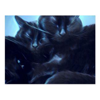 Cartão Postal Gatos pretos do sono