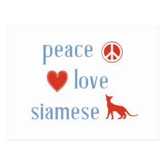 Cartão Postal Gatos Siamese do amor da paz