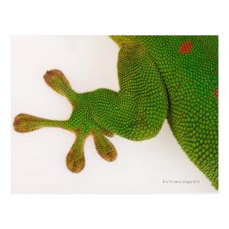 Cartão Postal Geco do dia de Madagascar (madagascariensis 2 de