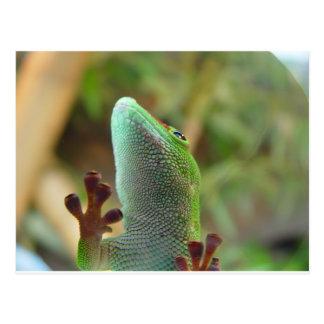 Cartão Postal Geco - para amantes dos lagartos!