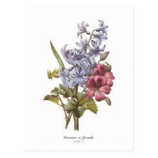 Cartão Postal Gerânio e jacinto