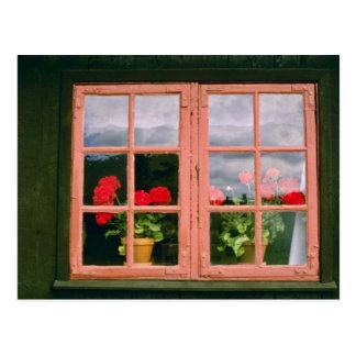 Cartão Postal Gerânio violetas na janela de um tradicional Ho
