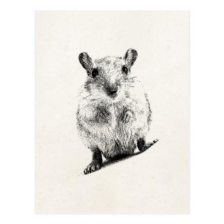 Cartão Postal Gerbils animais do animal de estimação da