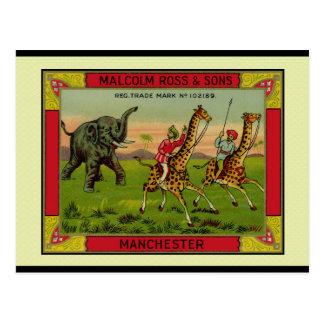 Cartão Postal Girafas e elefante