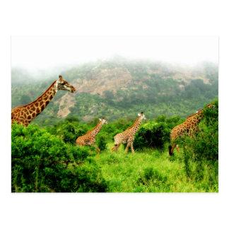 Cartão Postal giraffe postkarte