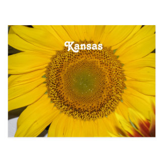 Cartão Postal Girassol em Kansas
