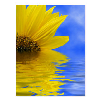 Cartão Postal Girassol na água