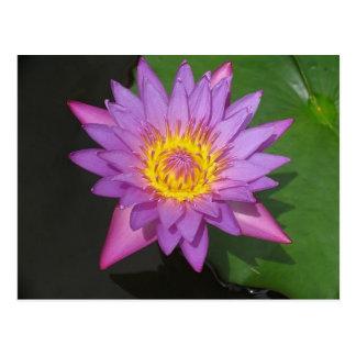 Cartão Postal Glória de florescência