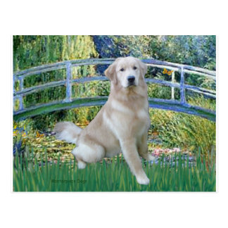 Cartão Postal Golden retriever 10 - Ponte