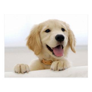 Cartão Postal Golden retriever puppy