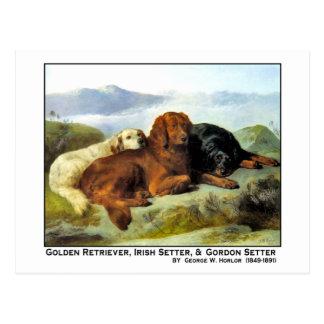 Cartão Postal Golden retriever, setter irlandês & setter de