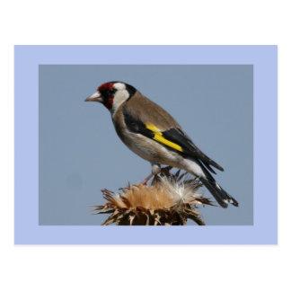Cartão Postal Goldfinch