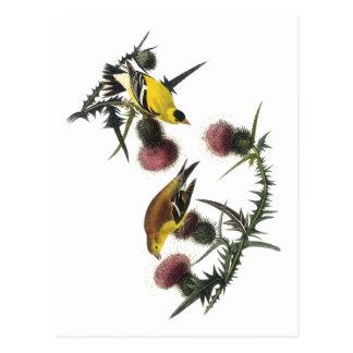 Cartão Postal Goldfinch do americano de Audubon