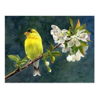 Cartão Postal Goldfinch e flores de cerejeira