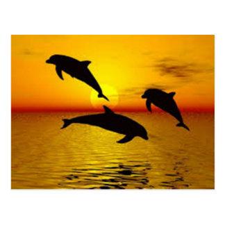 Cartão Postal golfinho