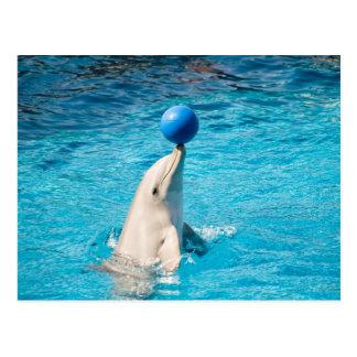 Cartão Postal Golfinho que tem uma bola