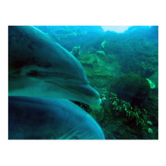 Cartão Postal Golfinhos
