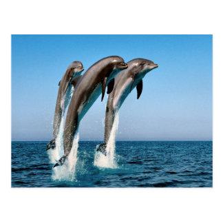 Cartão Postal Golfinhos de salto