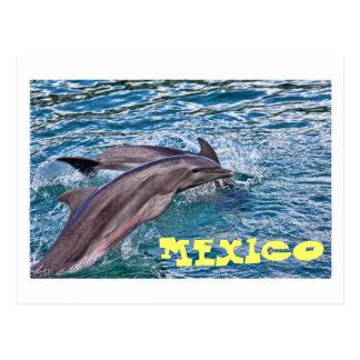 Cartão Postal Golfinhos de salto México