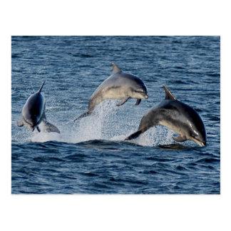 Cartão Postal Golfinhos selvagens que pulam montanhas de