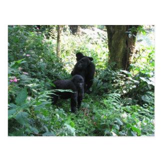 Cartão Postal Gorila de montanha